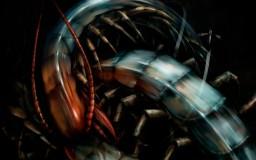 Salsa Invertebraxa - Queen Centipette II